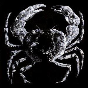 Lucas Hercberg - Crabe (2017)